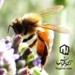 مسیریابی زنبور عسل
