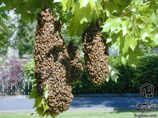 بچه-ی-زنبور-عسل-روی-شاخه-درخت