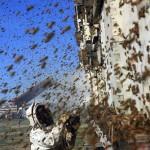 روش جلوگیری از بچه دادن زنبور عسل