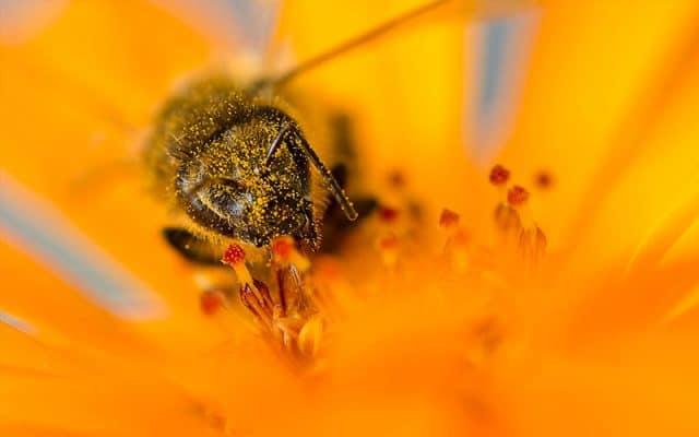 ژل رویال زنبورهای عسل