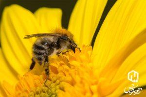 خواص درمانی عسل طبیعی