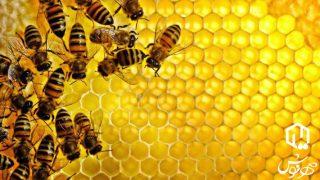 نحوه تولید عسل طبیعی