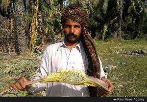 تصاویر زیبا از برداشت عسل طبیعی در شهرستان نیکشهر