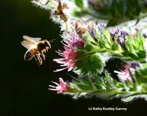 عکس زنبور 1