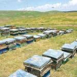 وظایف زنبوردار در مرداد ماه