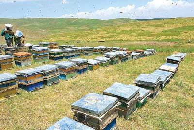 دستور العمل فنی زنبورداری