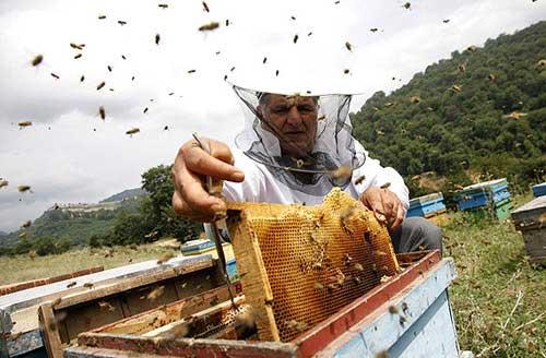 زنبورداری برای تازه کار ها