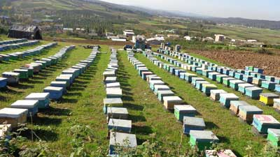شرایط و قوانین مهاجرت زنبورستان به یک منطقه